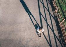 Patines del muchacho en tablero del patín Fotografía de archivo