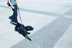 Patineur de rue avec le chien photographie stock