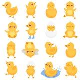Patinho amarelo Pintainho bonito do pato, patos pequenos e bebê ducky ilustração isolada do vetor dos desenhos animados ilustração do vetor
