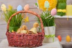 Patinhos da Páscoa, com decoração da Páscoa fotos de stock royalty free