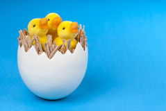Patinhos da Páscoa no shell de ovo no fundo azul. Fotografia de Stock