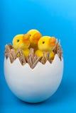 Patinhos da Páscoa no shell de ovo no fundo azul. Imagem de Stock