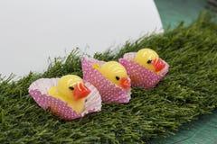 Patinhos doces (séries doces dos patinhos) Fotos de Stock