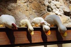 Patinhos e galinha Imagem de Stock Royalty Free