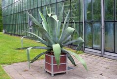 Patio with an agave plant in a Botanical Garden Royalty Free Stock Images