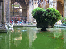Patio of the Cathedral in Barcelona, Spain stock photography