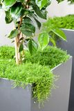 Patio container. Plants in a square patio container Stock Photo