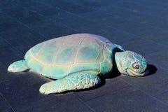 Patio de la tortuga Fotografía de archivo libre de regalías