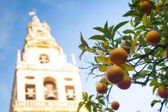 Patio DE los Naranjos stock foto
