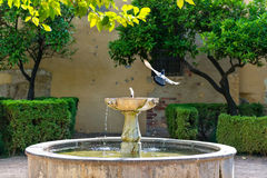 Patio with fountain and birds Stock Photo