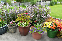Patio full of potted plants. Royalty Free Stock Photo