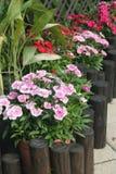 Patio garden Stock Images