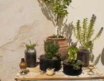 Patio griego Creta de las flores Imagen de archivo