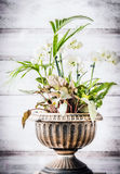 Patio indoor plant pot in urn planter at white wooden background. Front view Stock Image