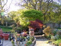 Patio ogród z ogrodowymi stawu i rośliny garnkami Zdjęcia Stock