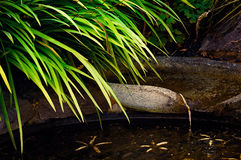 Patio Outdoor pond with flowing water Royalty Free Stock Photo