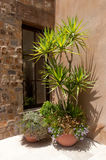 Patio planters Royalty Free Stock Images