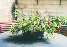 Patio pot with pretty flowers on table stock images