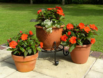 Patio Pots. On Terrace in Summer stock photo