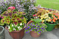 Patio of potted plants. Royalty Free Stock Photo