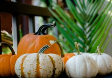 Patio. Pumpkins in the farm comes in different color and size. White small one to orange medium size. Good for decoration stock photography