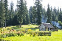 Patio rural cerca del bosque spruce Imágenes de archivo libres de regalías
