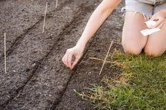 Patio trasero 46 que cultivan un huerto Imagen de archivo