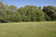 Patio trasero con los árboles Imagen de archivo libre de regalías