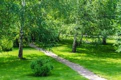 Patio trasero del árbol de abedul del jardín Fotos de archivo libres de regalías