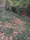 Patio trasero verde Foto de archivo libre de regalías