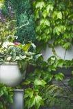 Patio vert d'été Pot ou planteur de fleur au feuillage luxuriant vert Photos libres de droits