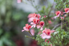 Patios flowers Royalty Free Stock Images