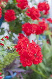 Patios flowers Royalty Free Stock Photography