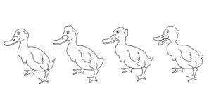 Pato Imagenes de archivo