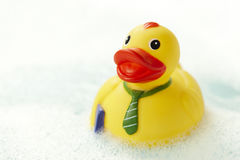 Pato amarelo da borracha do negócio Fotos de Stock
