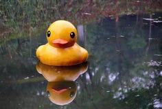 Pato amarelo na água Fotos de Stock
