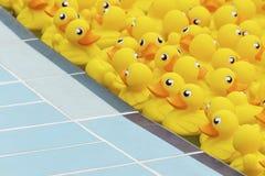 Pato amarillo del juguete Fotografía de archivo
