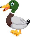 Pato bonito dos desenhos animados Imagem de Stock