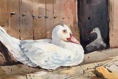 Pato branco pequeno bonito na frente de sua pintura da aquarela da capoeira foto de stock royalty free