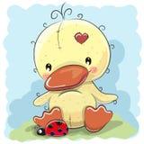 Pato con la mariquita Fotografía de archivo
