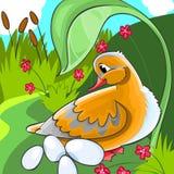 Pato con los huevos. Imagenes de archivo