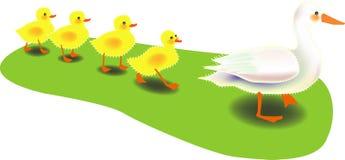Pato da fileira Ilustração Stock