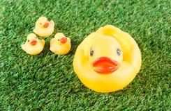 Pato de borracha amarelo Imagem de Stock