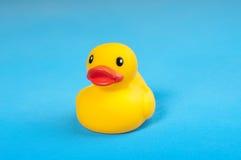 Pato de borracha amarelo na água azul do fundo Fotos de Stock