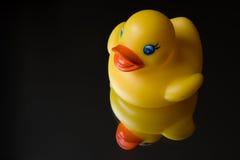 Pato de borracha com reflexão foto de stock