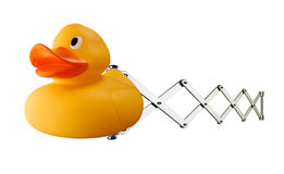 Pato de borracha no mecanismo da mola Imagem de Stock Royalty Free