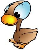 Pato de Brown Foto de archivo libre de regalías