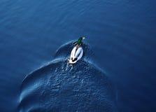 Pato de flutuação Fotografia de Stock Royalty Free