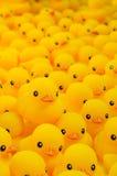 Pato de goma Foto de archivo libre de regalías