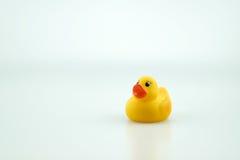 Pato de goma amarillo del juguete Fotos de archivo